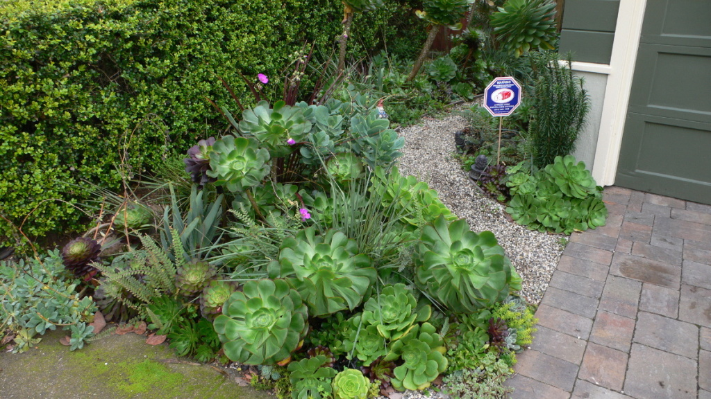 Succulent garden example