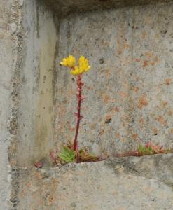 succulent growing on concrete